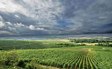 Los grandes vinos de la Borgoña